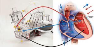 Left Heart Model